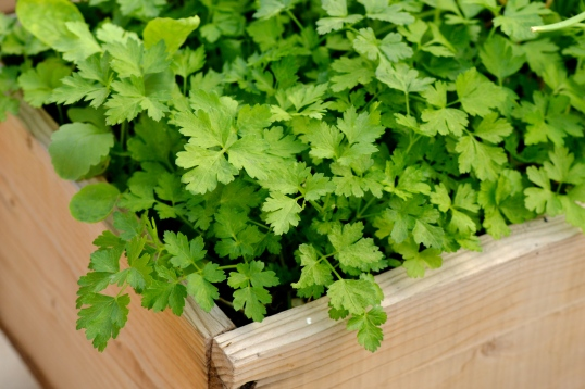 parsley mix